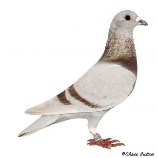 DNA Stock Birds